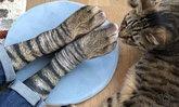 """""""ถุงเท้า"""" ที่จะทำให้เท้าคุณ กลายเป็น """"เท้าแมว"""" (ขนาดเจ้าเหมียวยังอึ้ง!)"""