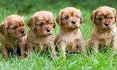 10 พันธุ์หมาเล็กๆ น่ารัก พกพาง่ายอุ้มสบายมือ