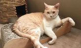 บ้านส่วนตัวของน้องแมวจากฟางข้าว ไอเดียยอดนิยมสำหรับคนรักแมว
