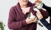 แมวสายพันธุ์ไหนกันนะ ที่ทาสแมวญี่ปุ่นนิยมเลี้ยงมากที่สุด