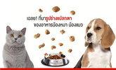 คนรักหมารักแมวต้องรู้!! เพราะอะไรอาหารเม็ดสุนัขและแมวถึงต้องมีหลายทรงหลากขนาด