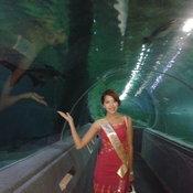 Miss Grand Myanmar 2013