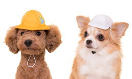 มาไขกาชาปองหมวกน้องหมาที่ญี่ปุ่น! คราวนี้มาในธีมนักเรียน ป.1 ล่ะ