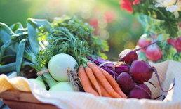 ผักผลไม้คล้ายร้อน จัดเต็มสารอาหารที่มีประโยชน์เพื่อสุขภาพ