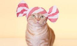 มาสวมมงให้น้องแมวกับแอคเซสเซอรี่สวมหัวสุดน่ารักลายใหม่ในธีม Sweet Candy