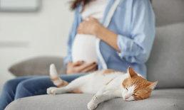 สัตว์เลี้ยงเป็น อันตรายต่อทารกในครรภ์ ได้หรือเปล่า