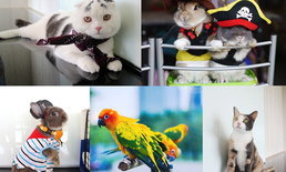 We Love Pets ครั้งที่ 8 มหกรรมสัตว์เลี้ยงแสนรัก ของเหล่าสาวกคนรักสัตว์ที่ยกกันมาทั้งบ้าน