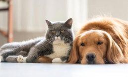 รู้หรือไม่? สัตว์เลี้ยงก็เครียดได้ เมื่อต้องอยู่กับคนตลอด 24 ชม.