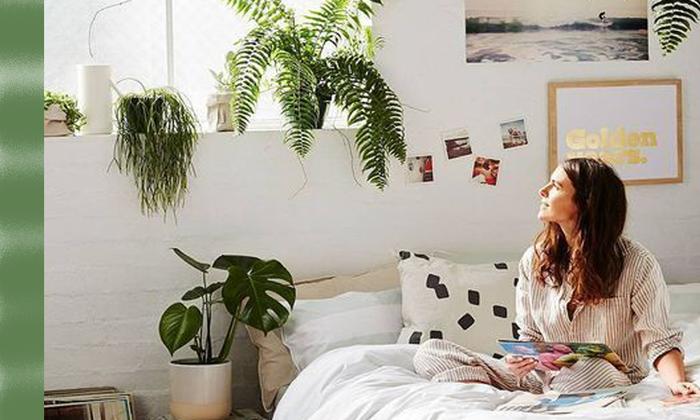 7 พันธุ์ไม้ปลูกในห้องนอนได้ช่วยกรองอากาศที่เป็นพิษ